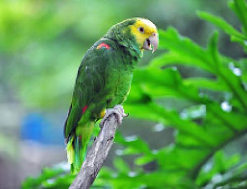 Everyday Care for Parrots