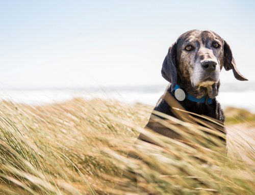 13 Dog GPS Trackers Compared