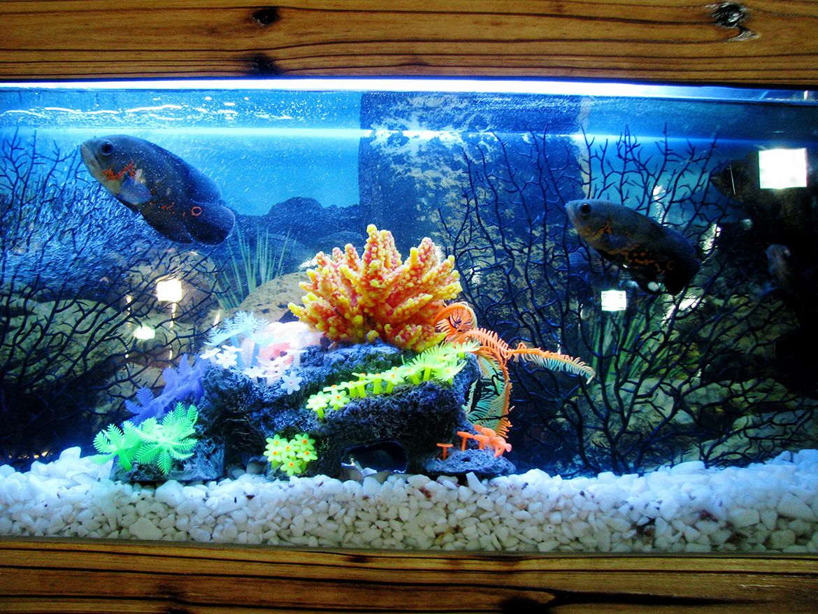 2-api-panaview-aquarium-kit-with-led-lighting-and-power-filter-5-gallon-compressor