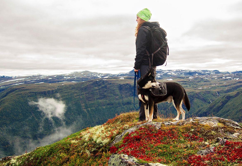 5-tuff-mutt-hands-free-dog-leash-for-running-walking-hiking-compressor