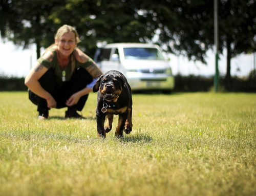 9 Things to Remember when Running with Dogs