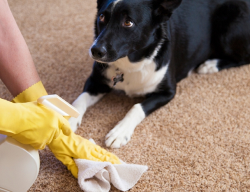 Tips to make Potty Training your Puppy easier.