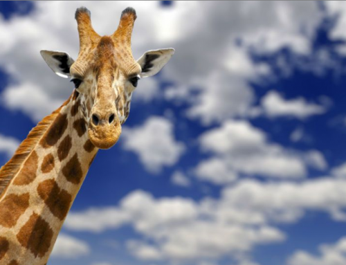 Who is April the Giraffe?