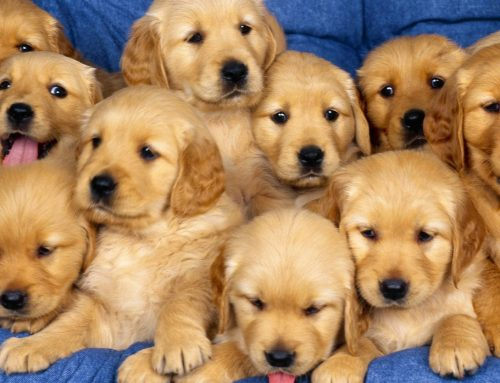 Wanna see Adorable Puppies on National Puppy Day?