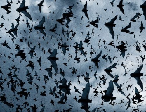 National Bat Appreciation Day!
