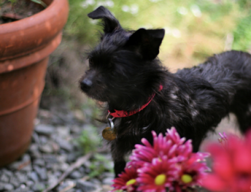 Protect Your Pets From Spring's Poisonous Plants