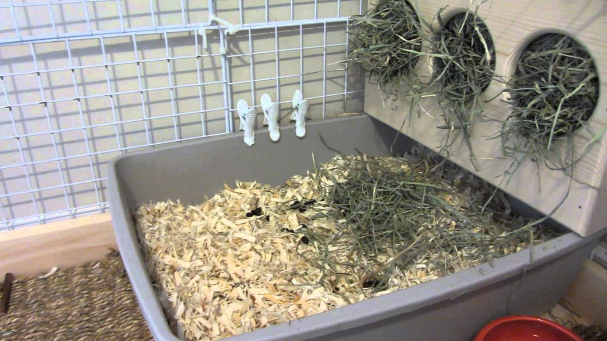 cat pees in litter box but poops on floor