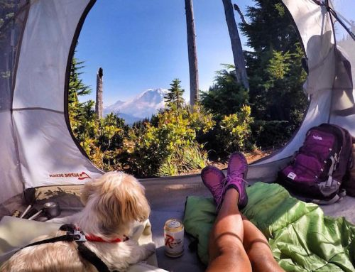 How to Be Safe When Camping With Your Dog