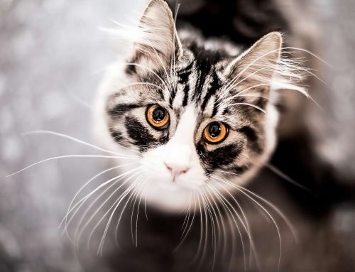 50 Astonishing Facts About Cats