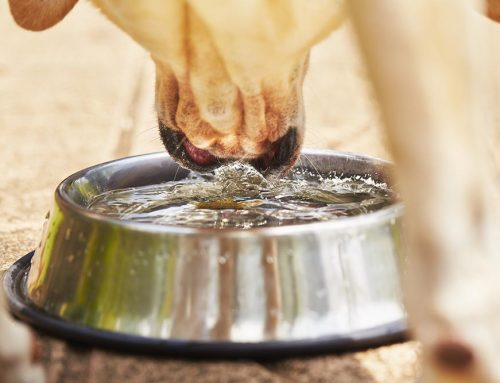 Tips to Keep Your Dog Cool in the Summer Heat