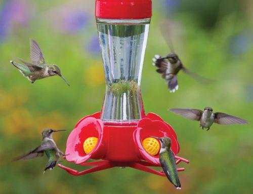 How to Make Hummingbird Nectar