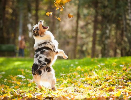 Top 7 Fall Pet Health Tips