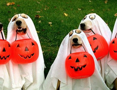 Pet Halloween Costumes are Finally Here!
