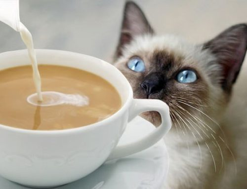 Would You Like a Coffee With Your Cat