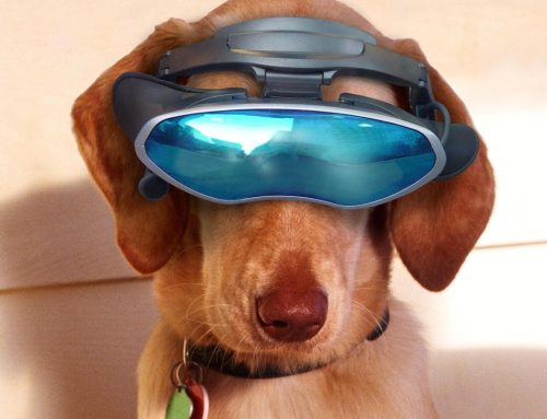 High-Tech Pet Gadgets You Need
