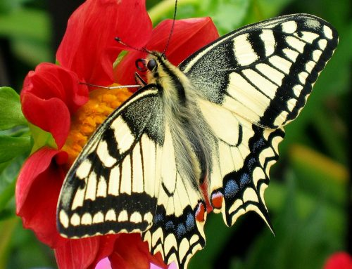 19 Surprising Butterfly Facts
