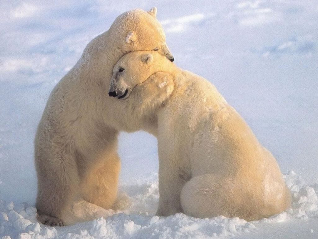 National Hug a Bear Day (Stuffed Not Carnivorous)