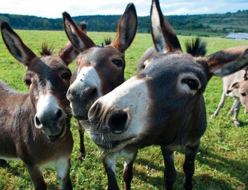 National Mule Day