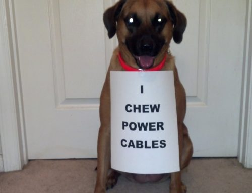 Pet Proofing Your Home's Electronics