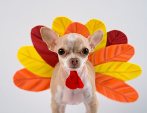 Thanksgiving Safety Tips For Your Pet
