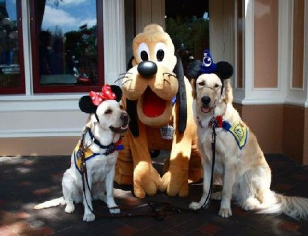 Bringing Your Dog to Disneyland