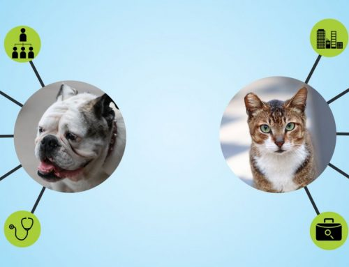 What Your Pet Choice Says About You