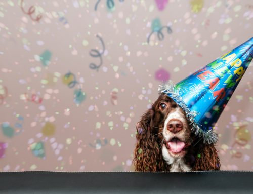10 New Year's Resolutions for Pet Owners