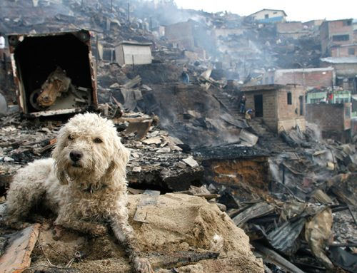How You Can Help Animals Affected by the California Wildfires
