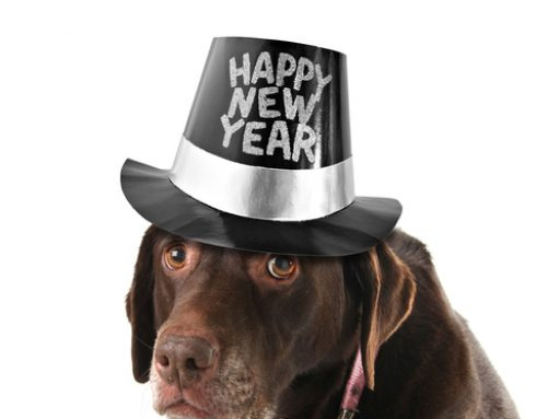 Bring in the New Year Safely With Your Pet